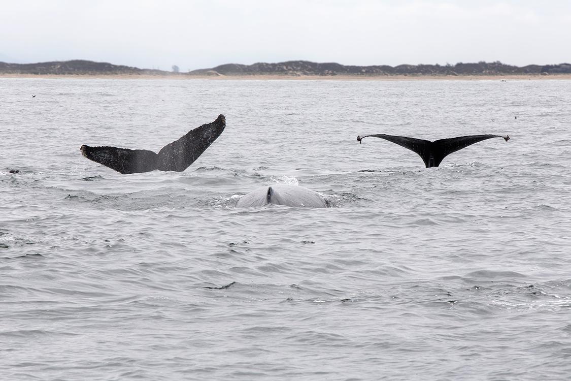 whale-watching-moss-landingcalifornia-086