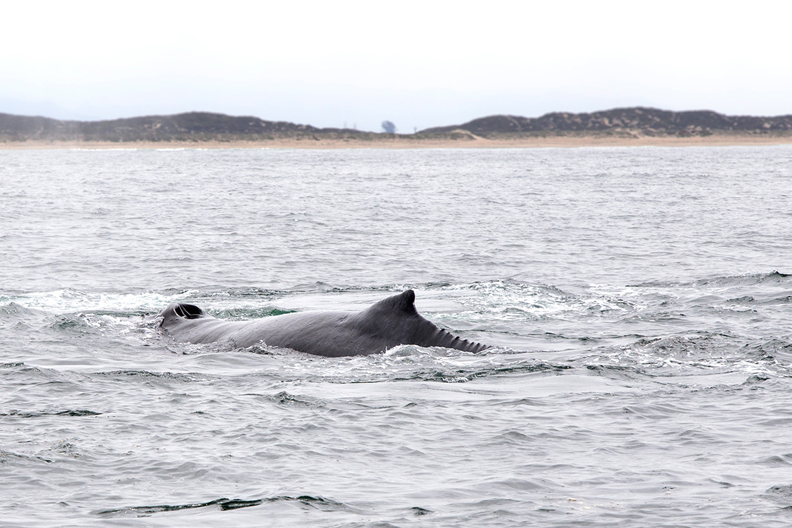 whale-watching-moss-landingcalifornia-088