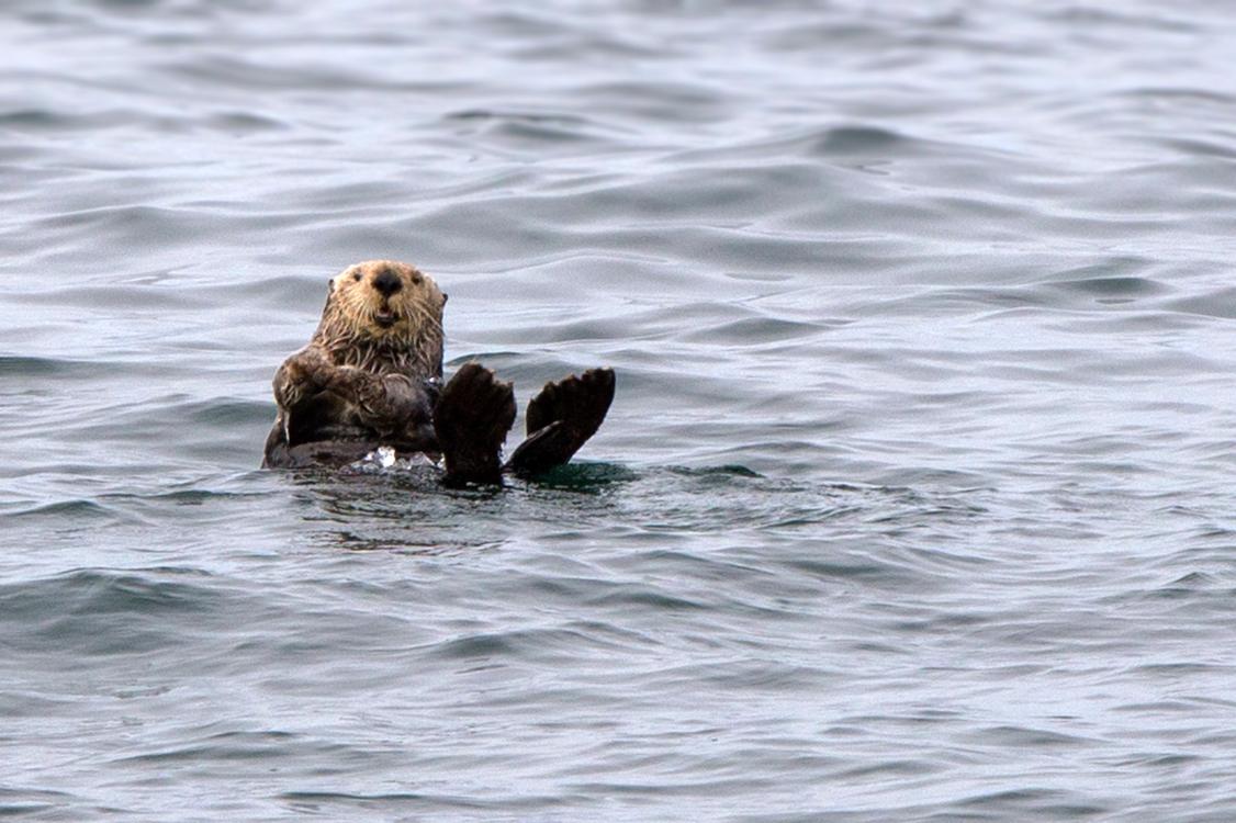 whale-watching-moss-landingcalifornia-097