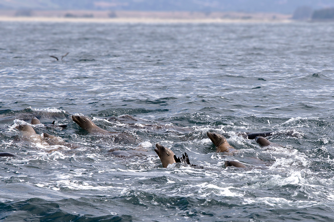whale-watching-moss-landingcalifornia-109