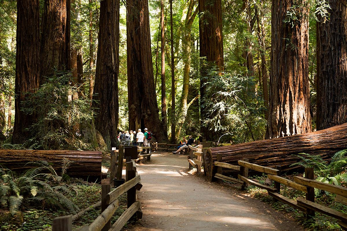 dgp-muir-woods-california-017