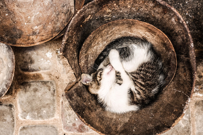 Photograph should a white/tabby cat curled up sleeping in what appears to be a metal bucket.