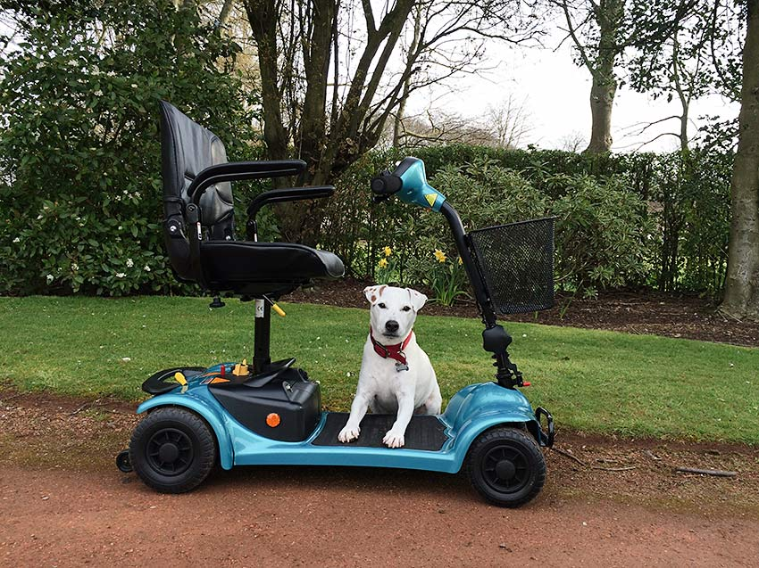 Dog on mobility scooter