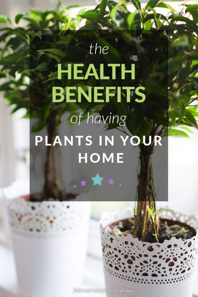 Plants can be beneficial to our health. Find out about the health benefits of plants in this article. Click to read or pin to save for later.