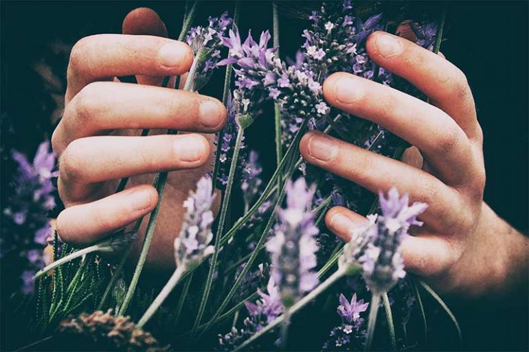 10 strategies I use to help improve mental health. Photo shows a close-up of a person's hands touching wild lavender flowers